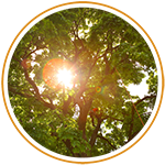 Why Hire An Arborist? thumbnail