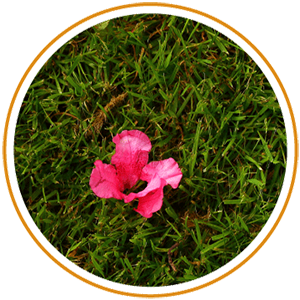 pink flower in grass