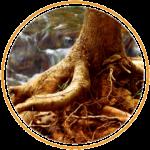 Healthy Roots & Soil thumbnail